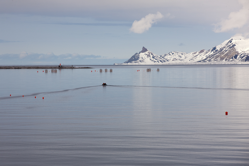 One of the boats used by scientists to service the ocean acidification experiment, heads out to check on the 'mesocosms', newly installed in Kongsfjord (middle distance, in three rows of three).