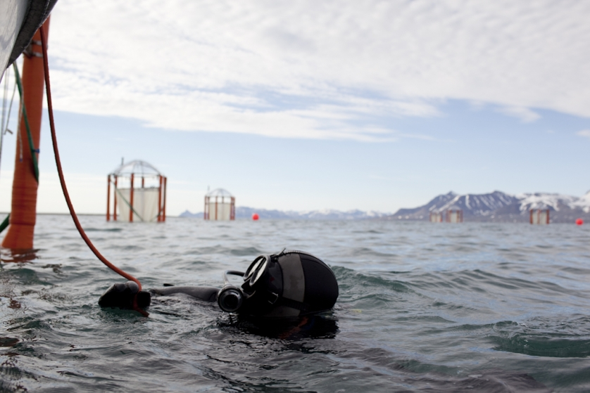 Scientists from the German marine research institute IFM-GEOMAR dive in the freezing water of Kongsfjord to open the 'bags' so that the mesocosms can be taken to pieces and transported back to Kiele in Germany.