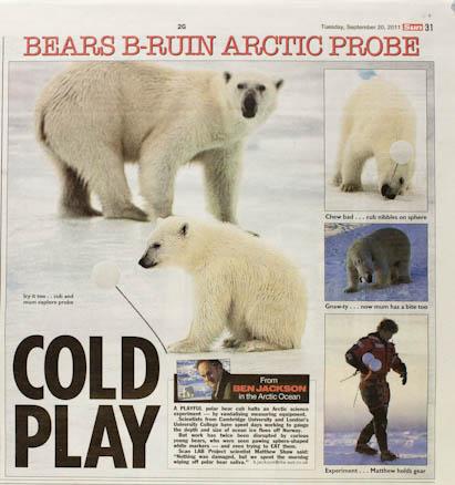 Soft news feature about polar bear cub